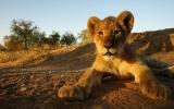 1500 králů na jednom místě potkáte v Krugerově parku v Jižní Africe
