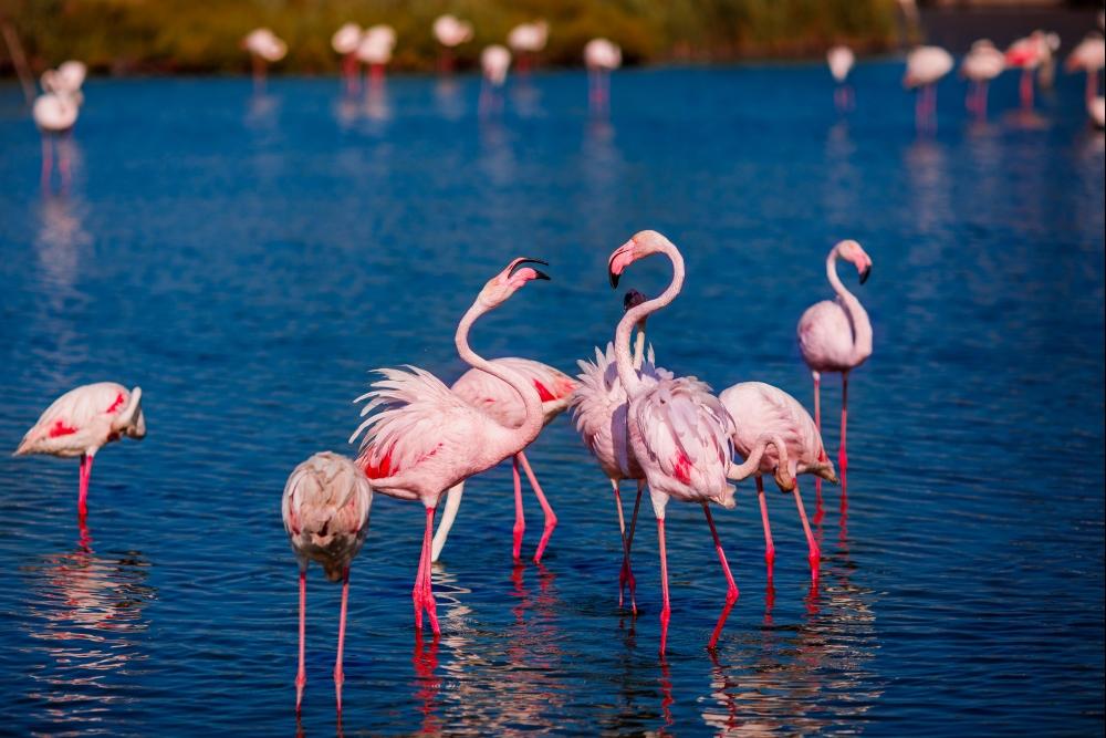 stejnojmenné jezero v národním parku Lake Nakuru