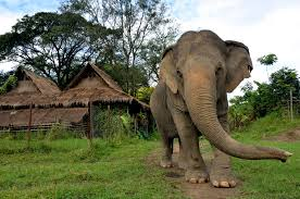 Sloní trekking