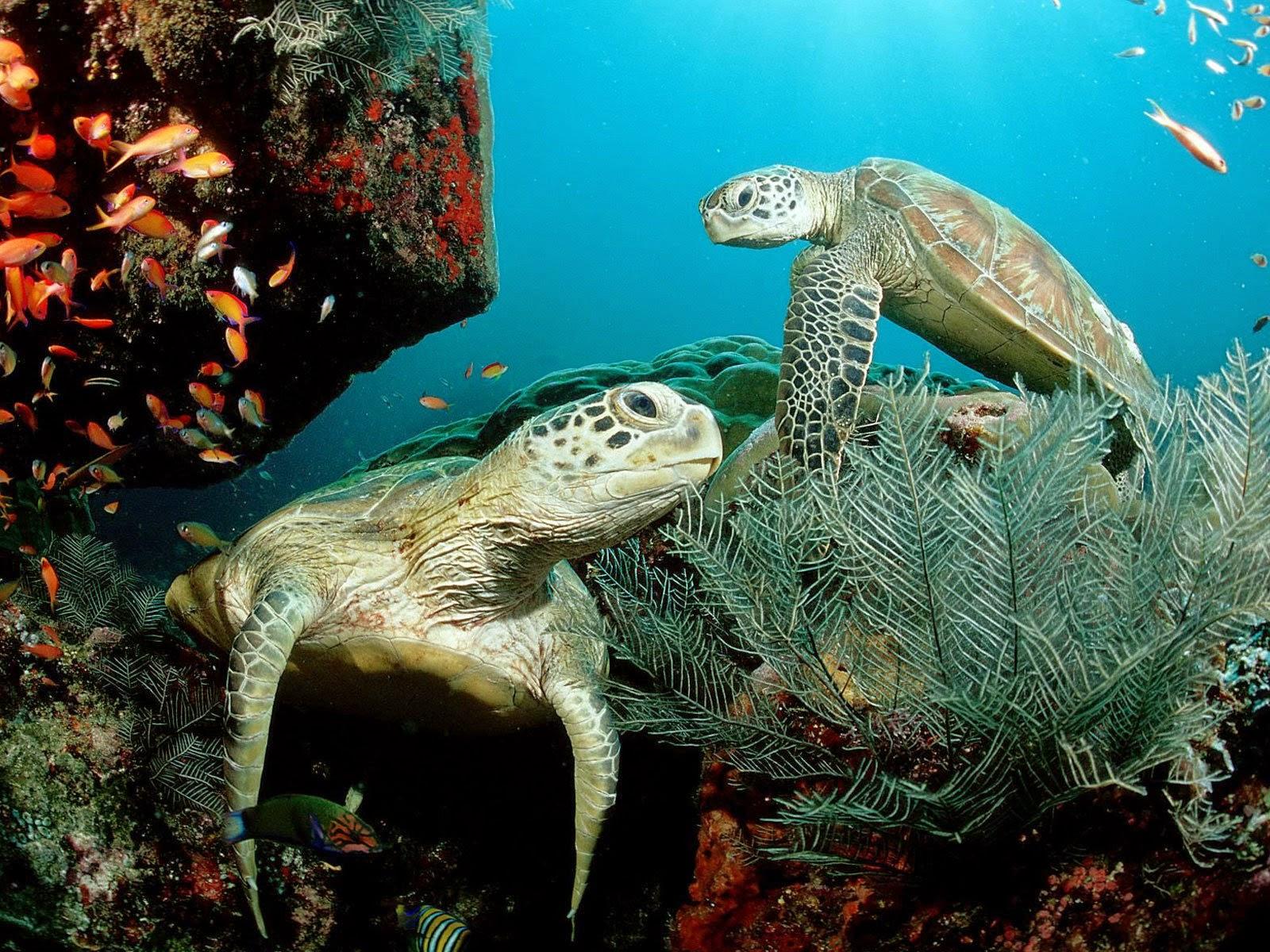 Mořské akvárium  Underwater World