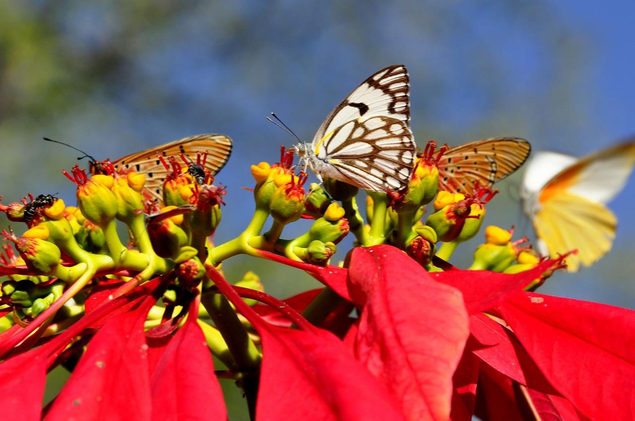 Botanické zahrady  - motýl