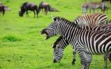 Africká Noemova archa: kráter Ngorongoro je posledním útočištěm téměř vyhubených druhů