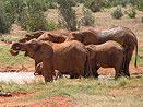 Letecké safari v Keni
