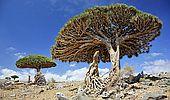 Ledové kluziště v poušti a stromy dračí krve. Poznejte divy zemí černého zlata