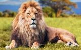 Poznejte tajemství afrických národních parků: Lávovou řeku, červené slony a Noemovu archu