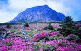 Čedžu: Jihokorejská Havaj, kterou střeží tajemní trpaslíci a lemují krásné pláže