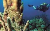 Chcete mít tropický ostrov jen pro sebe? Zkuste kubánský ráj Cayo Coco