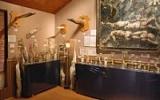 Nejdivnější muzea světa: Užijte si den mezi parazity nebo v muzeu penisů