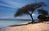 Ostrov draků Komodo: Největší ještěři světa a unikátní růžová pláž Pantai Merah