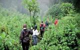 Trekem za gorilami do srdce rwandské divočiny