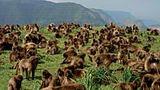 V Etiopii vás ohromí opičí království, skalní chrámy i tajemné domorodé kmeny