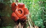 Vydejte se za orangutany a lovci lebek na divoké Borneo