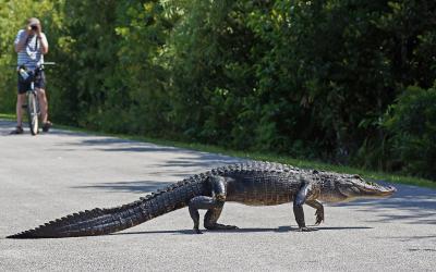 USA | Everglades NP