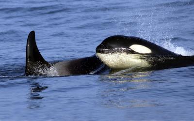 Návštěvu metropoli Britské Kolumbie osvěží plavba za velrybami... | Vancouver Island