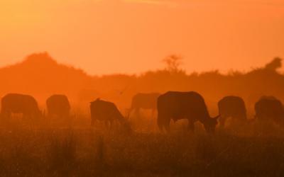 V rezervaci Karongwe | NP Kruger