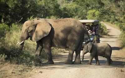 Na Safari v rezervaci Karongwe | Blyde River Canyon