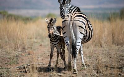 Safari 4x4 | Kruger NP