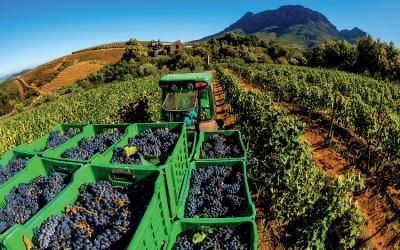 Vinice v oblasti Stellenbosch | Cape Town