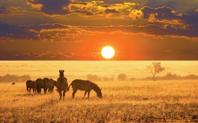 Safari v Chobe NP | Botswana