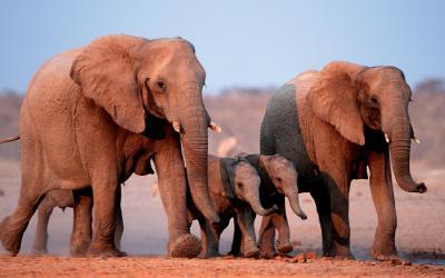 Safari v Etosha National Park | Namibie