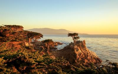 Lone Cyprus | 17 Mile Drive, Monterey
