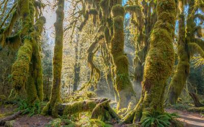 Deštné pralesy jsou nabité životem | Olympic NP
