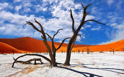 Věkovité akácie uvnitř vyschlého řečiště | Sossusvlei a Deadvlei