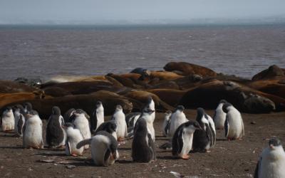 Mláďata tučňáků a rypouši