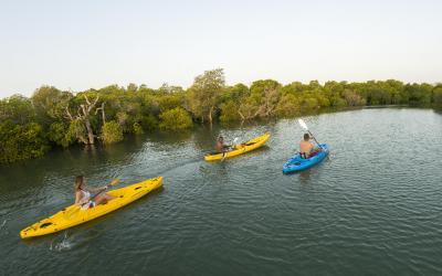 Mangrove paddle