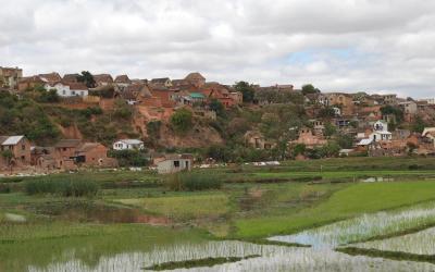 Madagaskar - rýžová pole | Madagaskar - rýžová pole