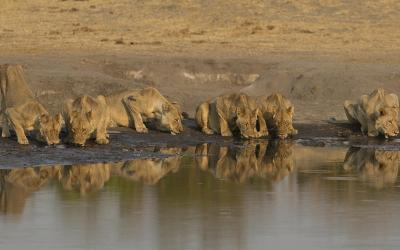Zimbabwe | Hwange NP