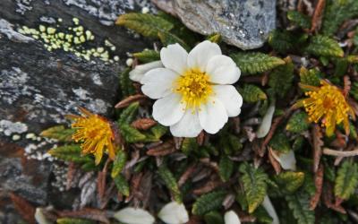Špicberská flora