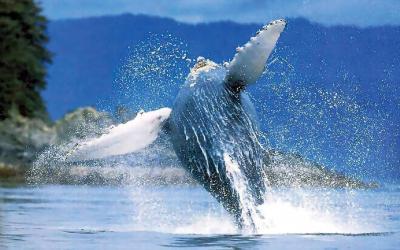 pozorování velryb | Dominikánská republika