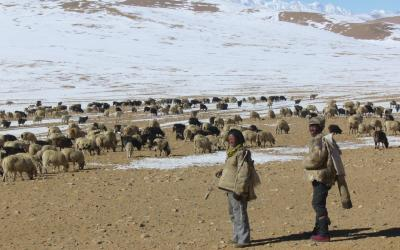 Pastevci Tibet