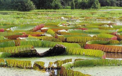 Amazonia | Brazílie