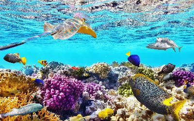 Francúzska Polynézia |