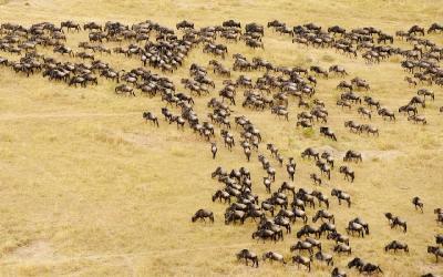 Pakoně v Masai Maře