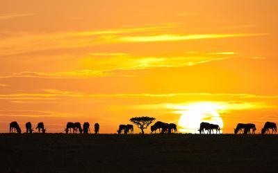Serengeti NP | Tanzanie