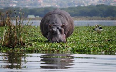 Lake Naivasha | Keňa