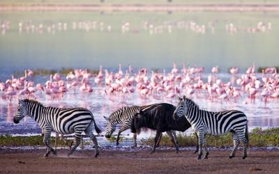 Keňa | Lake Nakuru
