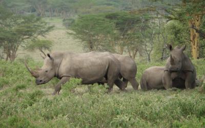 Nosorožci, NP Lake Nakuru