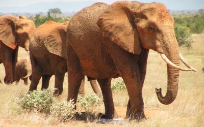 NP Tsavo East, sloni | Keňa