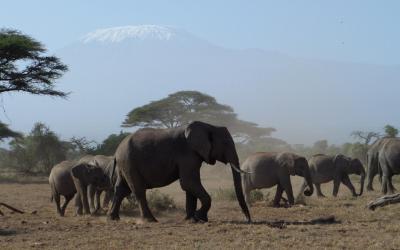 NP Amboseli, sloni | Keňa