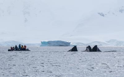 Kontakt s antarktickou faunou