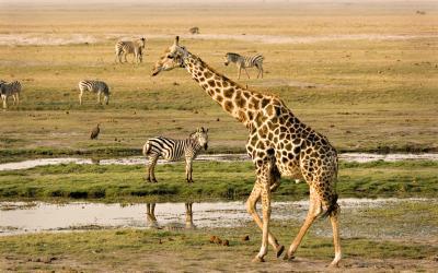 Chobe NP | Botswana