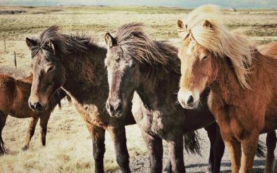 horses-1263136_1920