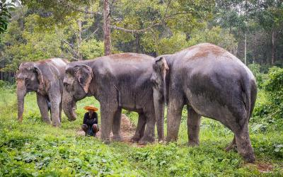Phuket elephant sanctuaries