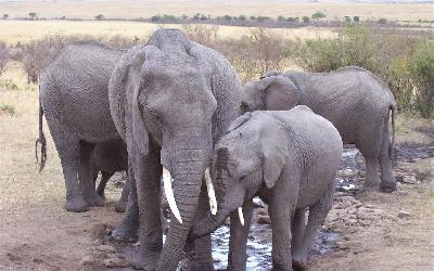 Sloni 5