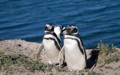 Argentína | Punta Tombo