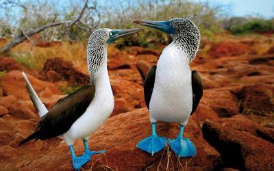 galapagos-bird